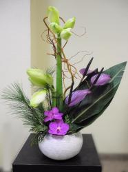 Amaryllis, Anthurium , saule, fleuron de Vanda