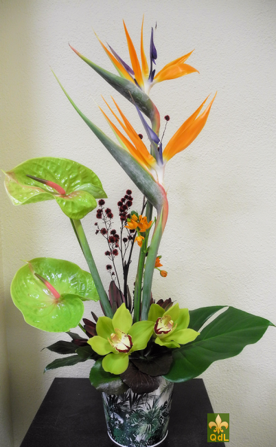 Strélizia , Anthurium , Fleuron Cymbidium Ornithogalum