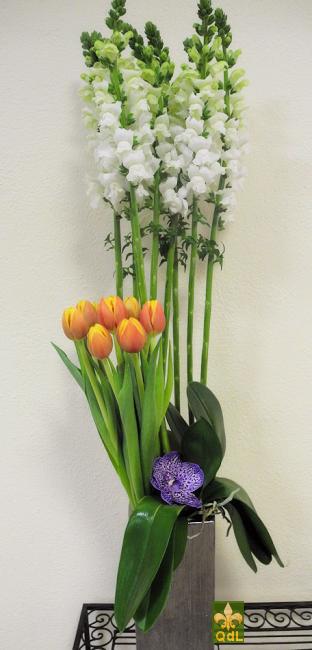 Mufflier , Tulipe , Fleuron de Vanda