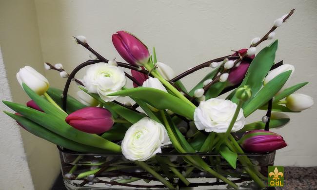Tulipe , Renoncule , Châton