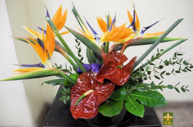 Strélizia , Anthurium , Fleuron de Vanda