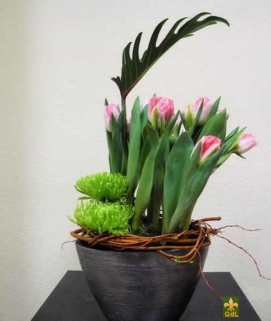 Tulipe , Anastasia , Feuille de Xanadu Branche de Saule