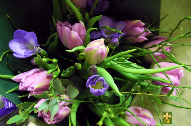 Tulipe ,Freesia  , verdure